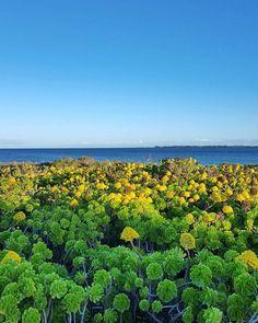 woweeee succulent anyone? #yorkepeninsula #succulents http://ift.tt/29qfGFN - http://ift.tt/1HQJd81