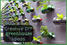DIY Greenhouse ideas get plants going faster and get you to your harvest sooner. / http://www.diynatural.com/bottle-greenhouse-ideas/
