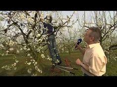 Die 31 Besten Bilder Von Obstbaume Fruit Garden Garden Plants Und