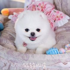 Ye Ji Won, Kdrama, Arte Final Fantasy, Go Ara, 17 Kpop, Korean Drama Movies, Drama Korea, Baby Dogs, Cute Quotes