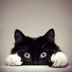 Catch you!