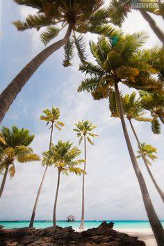 Maldives - beersandbeans