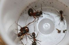 Home - Decor Ants, Pictures, Home Decor, Animals, Living Room Ideas, Bedroom, Photos, Decoration Home, Animales