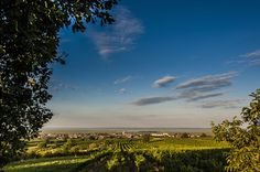 Austria's Burgenland Is Full of Wildlife and Wine. Home to my heart right now :-) Cottage Style, Family History, Austria, Vineyard, Places To Go, Wildlife, Europe, Outdoor, Heart