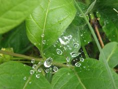 National Geographic Your Shot National Geographic Photos, Your Shot, Amazing Photography, Plant Leaves, Shots, Rain, Nature, Plants, Rain Fall