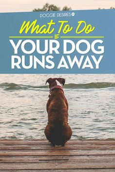 What to do if your dog runs away >> http://doggiedesires.com/what-to-do-if-your-dog-runs-away/