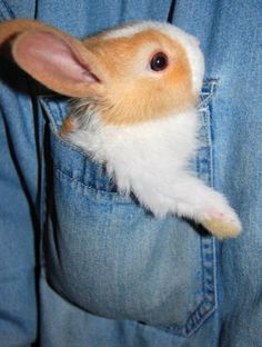 bunny in the pocket