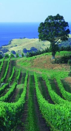 Auckland Winery - NZ
