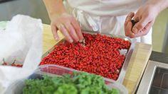 Frisk, How To Dry Basil, Grains, Food And Drink, Herbs, Botany, Herb, Seeds, Korn