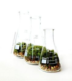Science Beaker Terrarium Set Can Mix With Liquid Materials And Do A Experiments.