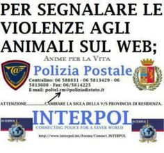 SOS animali