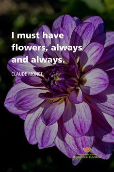 Words Quotes, Me Quotes, Garden Quotes, Public Garden, Flower Quotes, Claude Monet, My Happy Place, Botanical Gardens, Dahlia