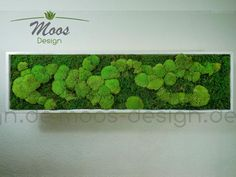 Moss Wall, Buy Plants, Plant Pictures, Wall Design, Wall Decor, Herbs, Table, Diy, Dusters