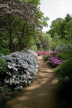 Savill Gardens - Surrey, England Beautiful Flowers Garden, Amazing Flowers, Beautiful Gardens, English Gardens, Farm Gardens, Garden Path, Garden Landscaping, Savill Garden, Places In England