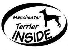 Hund Inside Auto AufkleberInside Aufkleber: Manchester Terrier 1