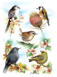 """Garden Birds"" by David Finney - Wildlife Artist & Illustrator Pretty Birds, Beautiful Birds, Different Forms Of Art, Garden Birds, Bird Embroidery, Bird Crafts, Bird Artwork, Bird Drawings, Bird Pictures"