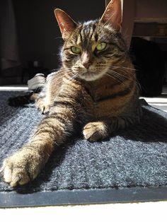 Toby, Pet of the Week 06/30/14
