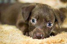 Ako odstrániť chlpy a srsť z kobercov? Cute Puppies, Cute Dogs, Dogs And Puppies, Puppy Care, Pet Care, Animals And Pets, Cute Animals, Baby Animals, Pet Shop Online