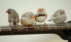 While finches are way at the cute end of the bird spectrum, I would never allow this at my house.