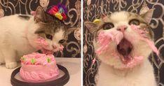Este gato comiendo tarta en su cumpleaños es tan adorable como gracioso | Bored Panda