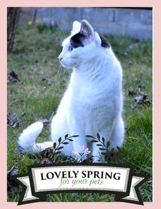 "I WANT A NEW TRAY! Let's play with Zolux and Yummypets to win it! Just follow the steps below: Follow Zolux on Pinterest: http://ymp.io/u/Dlm / Follow Yummypets on Pinterest: http://ymp.io/u/tvb / Follow the board ""Lovely spring for your pets !"": http://ymp.io/u/sei / Repin the products you want / Results on April 13th 2015. GOOD LUCK! #game #pets #rodent #bunny #petsupply #gift #pinterest #yummypets #zolux"