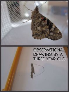 Observational drawing by 3 yr old of butterfly