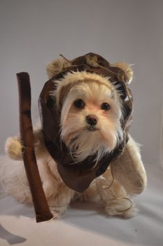 Diy dog ewok costume cut off brown t shirt sleeve and sew on ears furry woodland creature cream colored dog by sewdoggonecreative solutioingenieria Image collections
