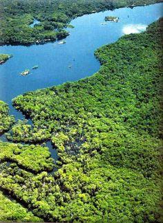 Parque Nacional de Jau - Amazonia
