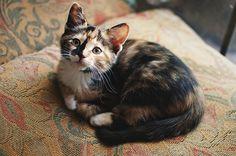 Kitteh Kats - cat, cats, kitty, gatto, puss, neko, kitten, katzen, gatti, kat, katze, cat bog, basically cats