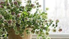 Как вырастить орегано из семян на подоконнике Greenery Centerpiece, Centerpieces, Wedding Flowers, Wedding Greenery, Whimsical, Plants, Instagram, Wedding Plants, Centerpiece