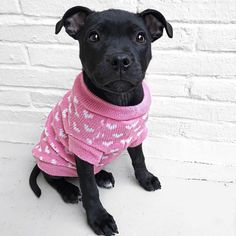 Today's Meet Leia, a Staffordshire Bull Terrier. Staffordshire Bull Terrier Puppies, Content Marketing Tools, 7 Month Olds, Instagram Blog, Therapy Dogs, Children With Autism, I Love Dogs, Teaching Kids, Cute Puppies