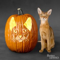 Free Pumpkin Carving Stencils of Favorite Cat Breeds    Let your friends and neighbors know which cat breed you think is best by carving a Halloween pumpkin that looks like your favorite feline.    Designed by Christi Boudewyns (from #BHG).
