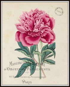Vintage French Peony No.1 Botanical Print - Canvas Art Print