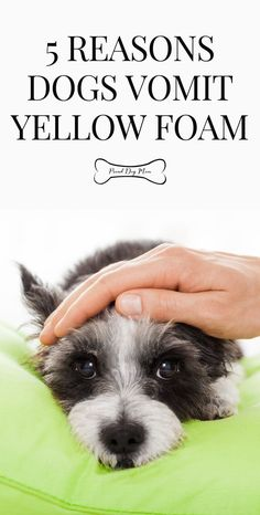 5 Reasons Dogs Vomit Yellow Foam | Dog Health Care