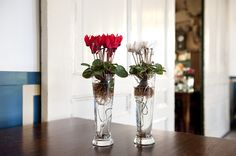 micro in red and white, cyclamen on water