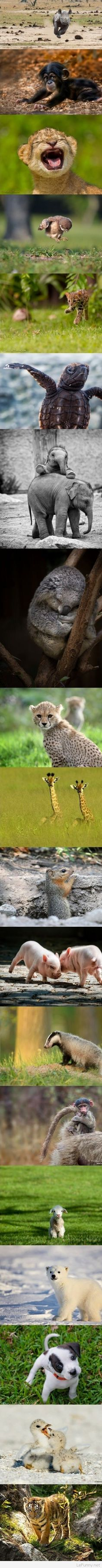 Funny baby animals spotted in the wild | Funny Pictures | Funny Quotes | Funny Jokes – Photos, Images, Pics
