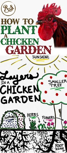 Grow a sustainable garden for your backyard chickens to save money on their feed bill. Plant herbs, shrubs and trees for a holistic, permaculture homestead. Great DIY ideas for beginners and beyond. Sustainable gardening for your hen's coop and run.