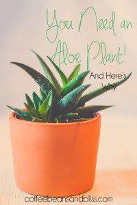 The benefits of having an aloe plant in your home