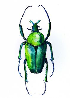 EscarabajoBeetle  Acuarela en papel Watercolour on paper Check my profile and follow or share if you like