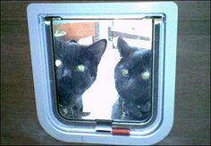 Inquisitive cats