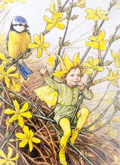 The Winter Jasmine Fairy. Vintage flower fairy art by Cicely Mary Barker. Taken from 'Flower Fairies of the Winter'. Click through to the link to see the accompanying poem. Cicely Mary Barker, Fairy Ring, Vintage Fairies, Beautiful Fairies, Flower Fairies, Fantasy Illustration, Fairy Art, Magical Creatures, Faeries