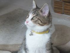 Adı : boncuk Irkı : Tekir Kedi Cinsiyet : Erkek Kedi Evimizin prensi :))