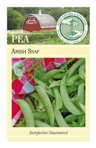 """Seed Savers Exchange 939 100-Pack Open Pollinated Pea Seed, Amish Snap by Seed Savers Exchange. $5.88. Yields over a 6-week period if kept picked. Delicate and sweet even when the seeds develop. Vines grow 5-6' tall and are covered in 2"""" translucent green pods. Snap, 60-70 Days. Superb snap pea reportedly grown in the Amish community long before present snap pea types. (Pisum sativum) Peas thrive in cool weather. Sow seeds outdoors as soon as soil can be worked ..."""