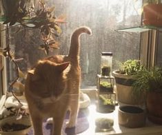 i love plants and i love cats they distract me from sad Ich liebe Pflanzen und ich liebe Katzen, sie lenken mich von traurig ab Pretty Cats, Cute Cats, Beautiful Cats, Beautiful Women, Illustration Inspiration, Gatos Cats, Cat Aesthetic, Pets, Cat Lady