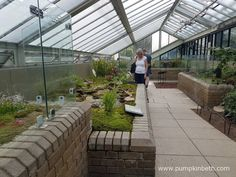 Inside the newly refurbished carnivorous plants area, inside the Princess of Wales Conservatory, at the Royal Botanic Gardens, Kew.