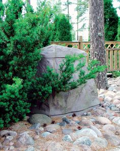 Biolan Maisemakompostori Kivi on tarkoitettu puutarha- ja keittiöjätteen kompostointiin omakotitaloissa ja vapaa-ajanasunnoilla. Reilun kokonsa ansiosta se soveltuu hyvin puutarhajätteen sekä kesämökin käymäläjätteen kompostointiin. Luonnonkiven värinen Maisemakompostori sulautuu osaksi ympäristöään ja sopii näin pieneenkin pihaan. Composting, Plants, Plant, Planets