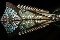 The geometric fish Photo by Angiolo Manetti -- National Geographic Your Shot