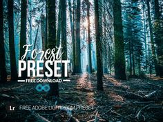 Free Forest & Woodlands Lightroom Preset by Photonify Types Of Photography, Portrait Photography, Best Background Images, Urban Landscape, Lightroom Presets, Instagram Background, Picsart Background, Gd, Free