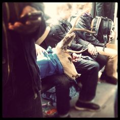 Nothing surprises me anymore on #muni - #taxidermy by facmsc1, via Flickr
