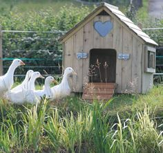 One day we will own some lovely Indian Runner Ducks and a gorgeous little duck house. There are some fantastic products to choose from on the Flyte So Fancy website. Backyard Ducks, Chickens Backyard, Duck House Plans, Duck Pens, Duck Duck, Goose House, Duck Coop, Duck Farming, Poultry House